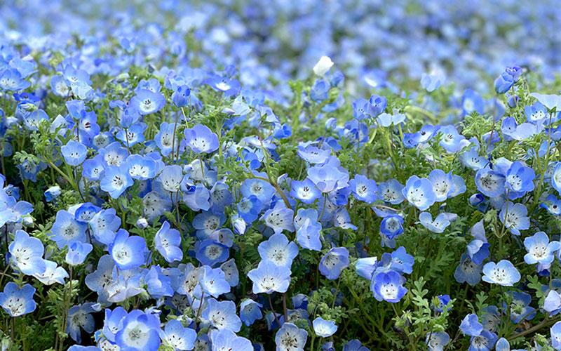 お花畑のはなし。