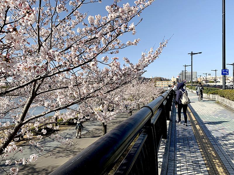 「桜」の観光スポット