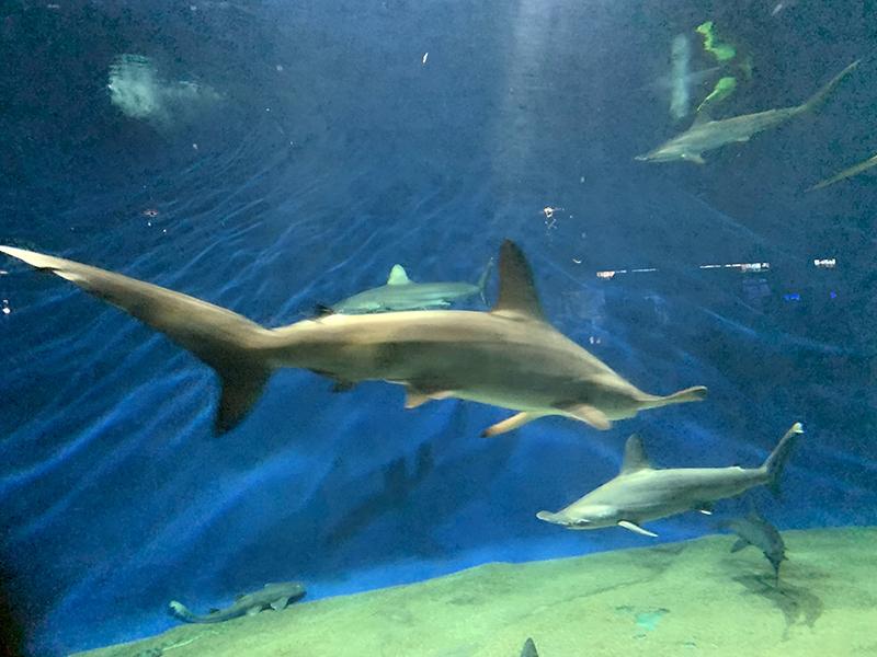 アクアワールド・大洗のサメ